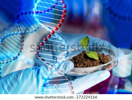 science, biology, ecology, research and people concept - close up of scientist hands holding petri dish with plant and soil sample in bio laboratory over dna molecule structure - stock photo