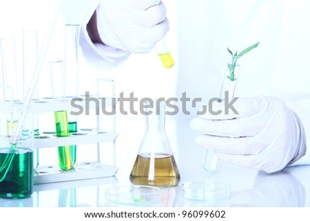 Science experiment with plant leaves in laboratory - stock photo