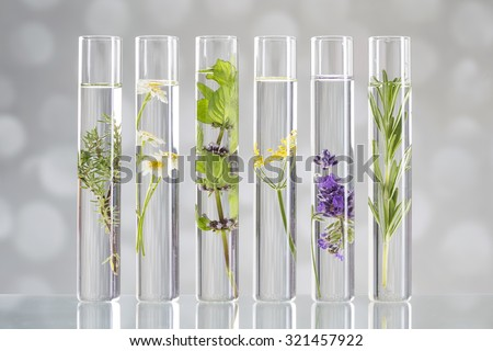 Scientific Experiment - Flowers and plants in test tubes - stock photo