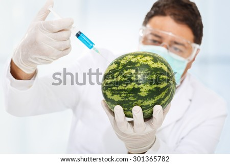 Scientist genetically modifying a watermelon - stock photo