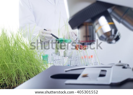 Scientists Checking and statistics notes functions of roots of rice in the lab. In order to improve the breed Jasmine rice