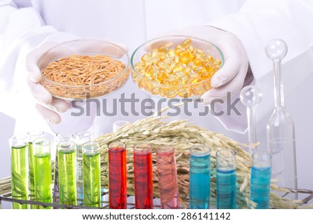 Scientists, research of rice, Rice bran oil in laboratory. - stock photo