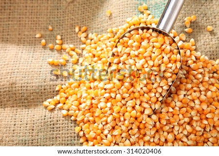 scoop of the maize corn on the wooden background - stock photo