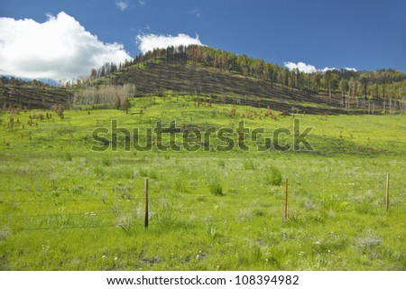 Scorched hillside and fresh spring growth in Centennial Valley, Lakeview, Montana - stock photo