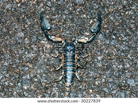 Scorpio - stock photo