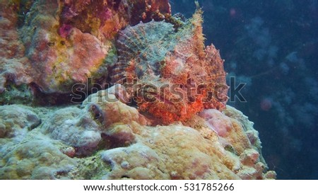 Scorpion fish laying on the coral reef