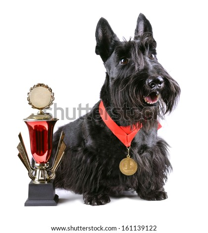 Scotch terrier with gold medal and winner cup on a white background - stock photo