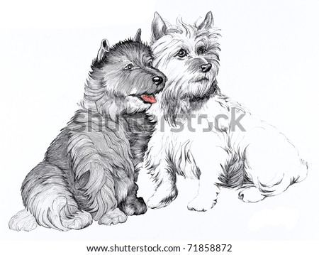 Scottie dogs on a white background - stock photo