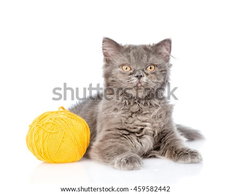 Scottish cat lying with a ball of wool. isolated on white background