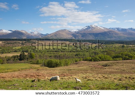 Scottish countryside and snow topped mountains Ben Nevis Scotland UK in the Grampians Lochaber Highlands close to the town of Fort William in summer