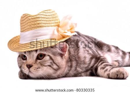Scottish fold kitten wearing white straw hat isolated on white background - stock photo