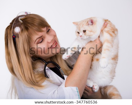 Scottish kitten in veterinary clinic, isolated on white - stock photo