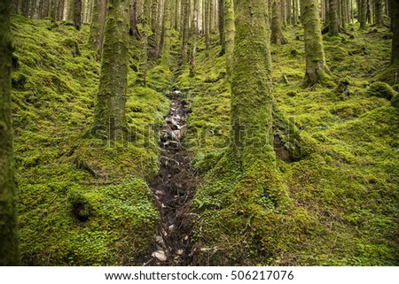Scottish stream in the wild mossy forest