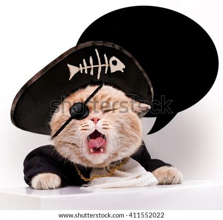 Screaming cat in a pirate hat. - stock photo