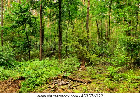 Scrub in the dense wild forest