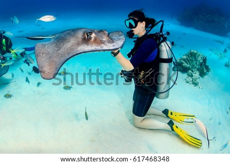 stock-photo-scuba-diver-and-a-southern-s