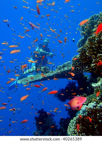 Scuba Diver and Coral Reef - stock photo