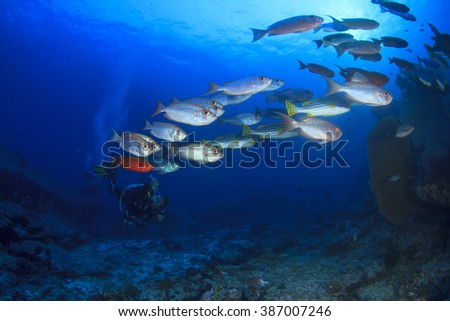Scuba diver exploring reef with fish