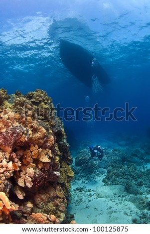Scuba Diver next to a Coral Wall under the boat