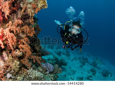 scuba diver on coral reef in red sea