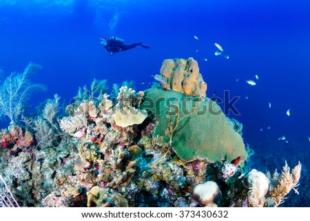 SCUBA diver over a coral reef - stock photo