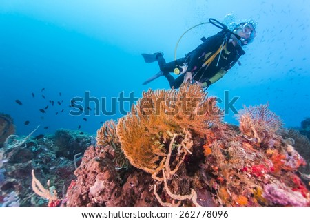 Scuba Diver passing through colorful tropical coral reef with fishes. - stock photo