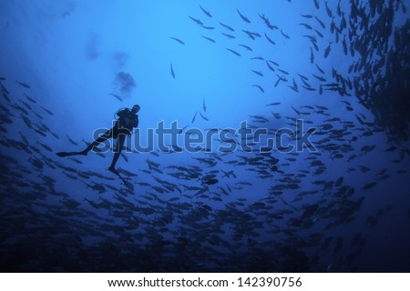 Scuba Diver Silhouette in School of Fish - stock photo