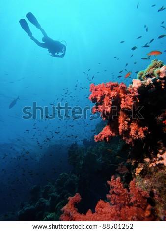 Scuba Diver silhouette over coral reef - stock photo