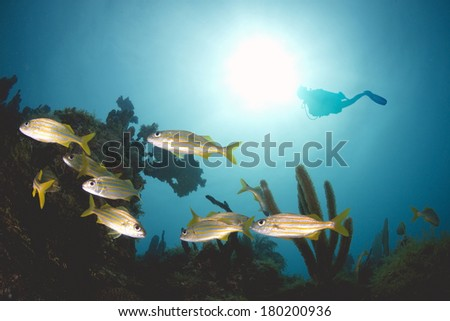 Scuba Diver Silhouette Underwater at Caribbean Coral Reef - stock photo