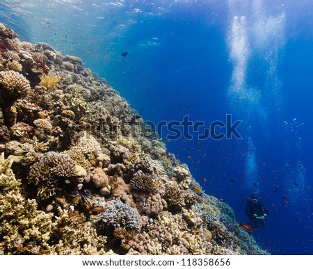 SCUBA diver surrounded by tropical fish and hard corals on a coral reef - stock photo