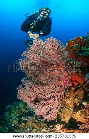 SCUBA diver swimming next to delicate, colorful soft and hard corals on a tropical reef - stock photo