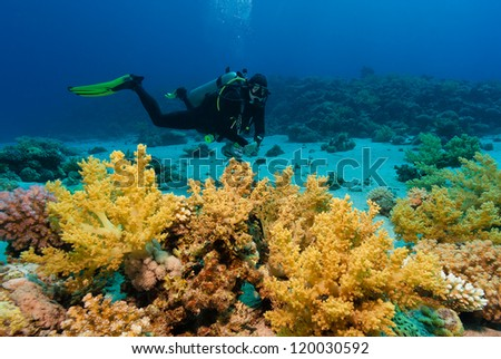 SCUBA diver swimming next to soft corals on a tropical reef - stock photo
