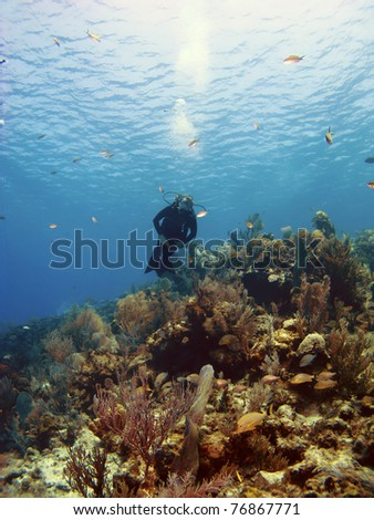 Scuba Diver Swimming over a Cayman Island Reef - stock photo