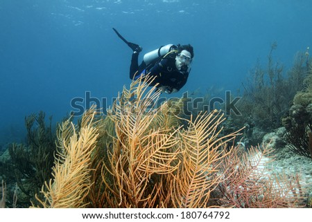 Scuba Diver Swimming Over a  Forest of Gorgonians on a Coral Reef - Bonaire - stock photo
