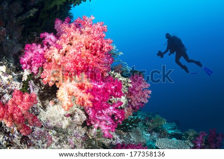 Scuba diver swims by a beautiful tropical reef full of vibrant purple and orange soft corals. - stock photo