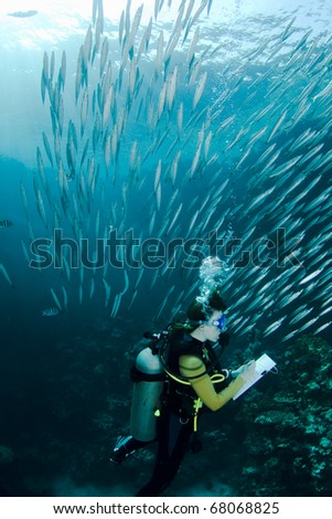 Scuba diver taking notes during an underwater Scuba lesson, surrounded by a school of small Baracudas - stock photo