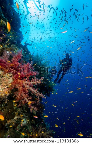 SCUBA diver with a camera in silhouette next to red soft corals on a deep reef wall - stock photo
