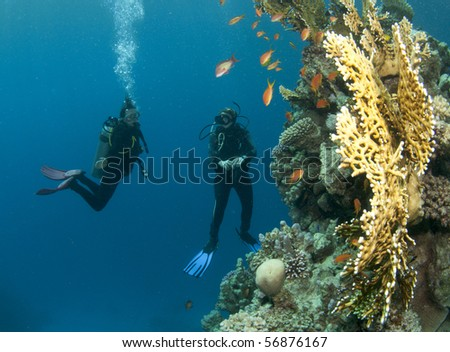 scuba divers and coral - stock photo