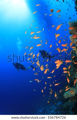 Scuba Divers and Tropical Fish - stock photo