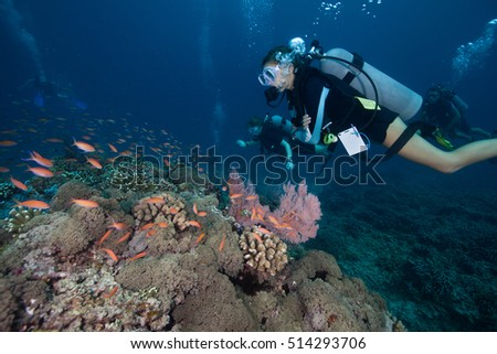 Scuba divers at the coral reef