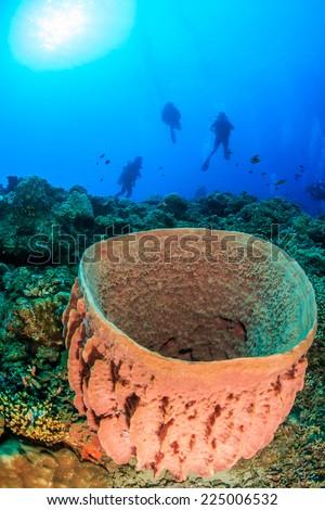 SCUBA Divers near a large barrel sponge on a tropical coral reef - stock photo