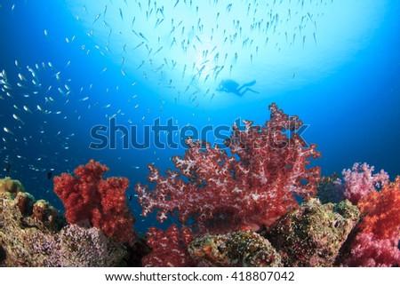 Scuba divers swim over coral reef underwater in ocean - stock photo
