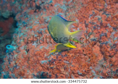 Scuba diving in Bali, Indonesia - stock photo