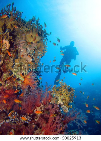 Scuba diving in the Red Sea.