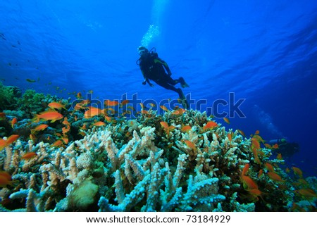 Scuba Diving on a colorful tropical Coral Reef - stock photo
