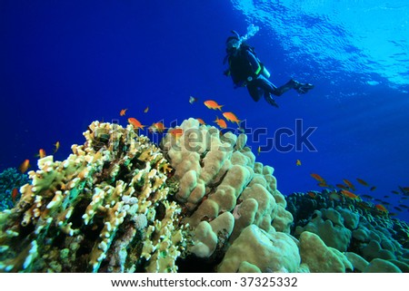 Scuba Diving on a Coral Reef - stock photo