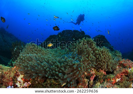 Scuba diving over coral reef with tropical fish