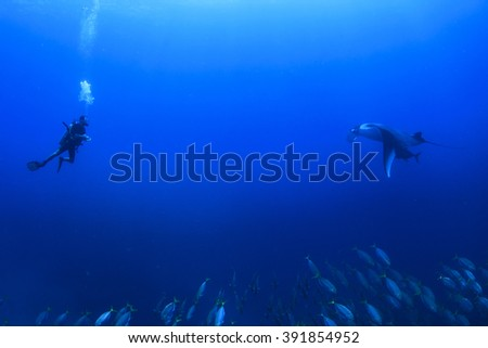 Scuba diving with manta ray - stock photo