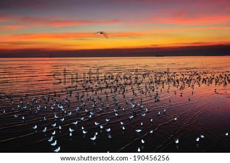 sea and birds - stock photo