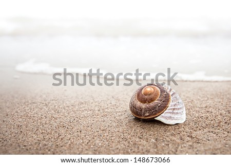 Sea background with seashell on the sandy beach - stock photo